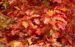 Осенним днем 05.10.2014