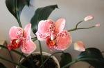 №2. Орхидея из полимерной глины.